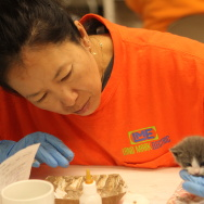 A volunteer hand feeds a kitten at Best Friends Animal Society's kitten nursery in Mission Hills, CA.