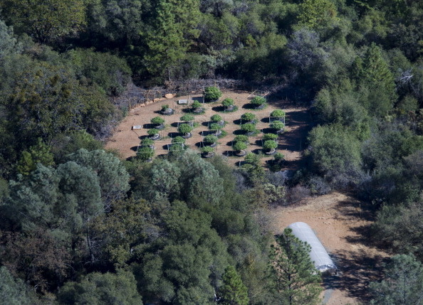 Fish and Game wardens search for marijuana farms in the Sierra Foothills
