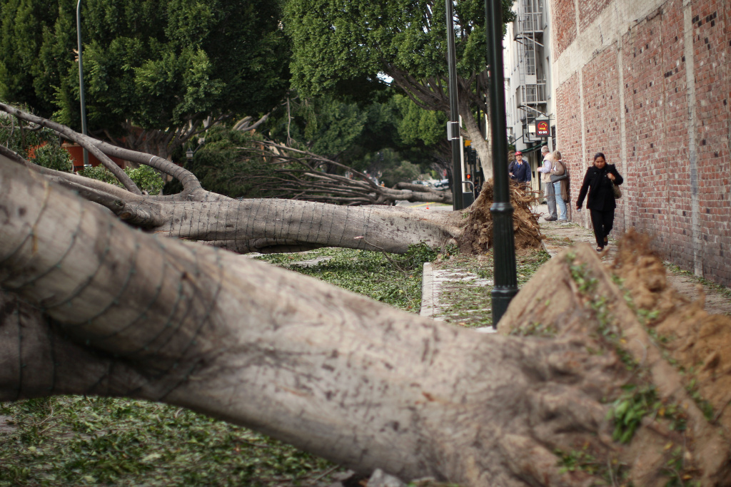 People walk past fallen trees in Green Street after strong Santa Ana Winds cause the worst local wind damage in decades on December 1, 2011 in Pasadena, California.