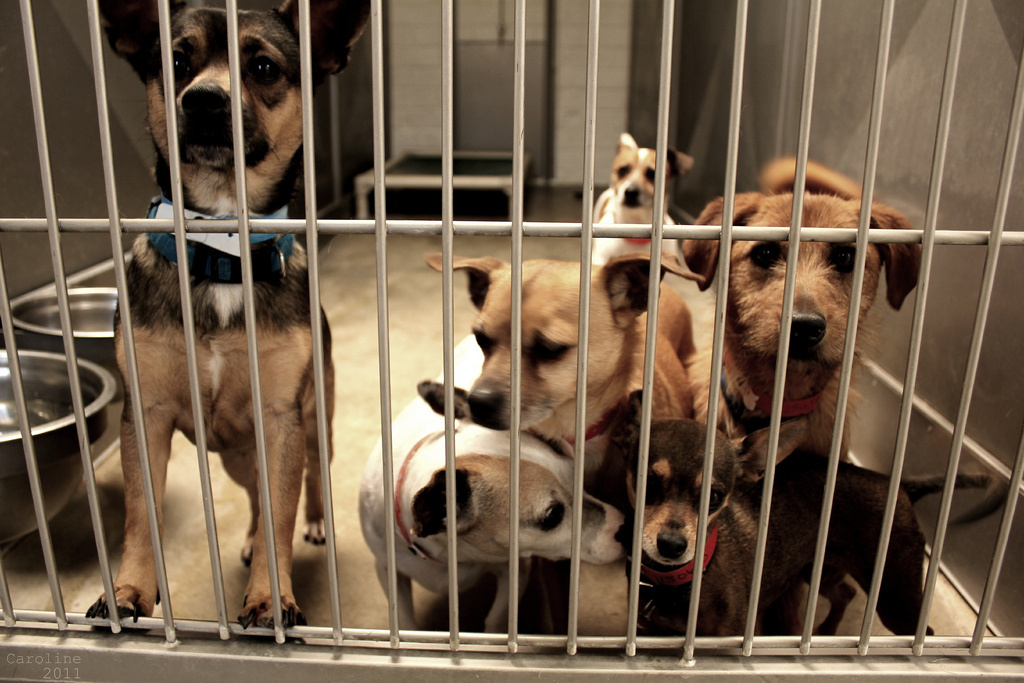 File: Dogs at an animal shelter.