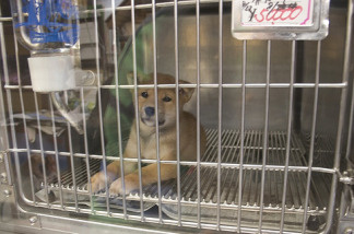 A small caged puppy waiting to be sold in a pet store