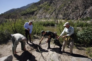 U.S. Department of Agriculture Forest Service officials remove a non native tobacco tree at the Angeles National Forest on April 15, 2011. Nearly two years after an arsonist ignited what became the largest fire in Los Angeles County history, officials have launched an effort to restore tens of thousands of acres in some of the most severely charred areas of the mountainous Angeles National Forest.
