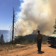 Trailhead Fire