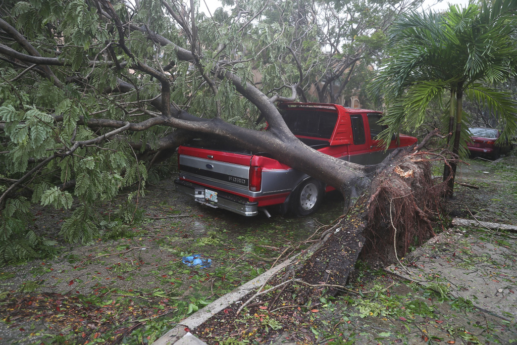 A tree fell onto a pickup truck after being knocked down by the high winds as Hurricane Irma arrives on September 10, 2017 in Miami, Florida.
