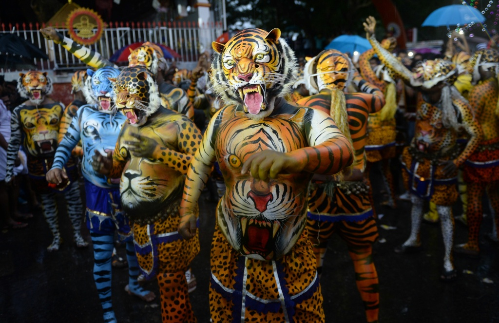 Performers painted as tigers take part in the 'Pulikali', or Tiger dance, in Thrissur, india on September 7, 2017.