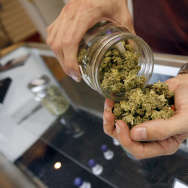A budtender pours marijuana from a jar at Perennial Holistic Wellness Center medical marijuana dispensary, which opened in 2006, on July 25, 2012 in Los Angeles, California.