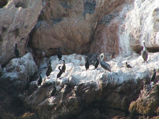Point Bennett on San Miguel Island on Oct. 6, 2012.