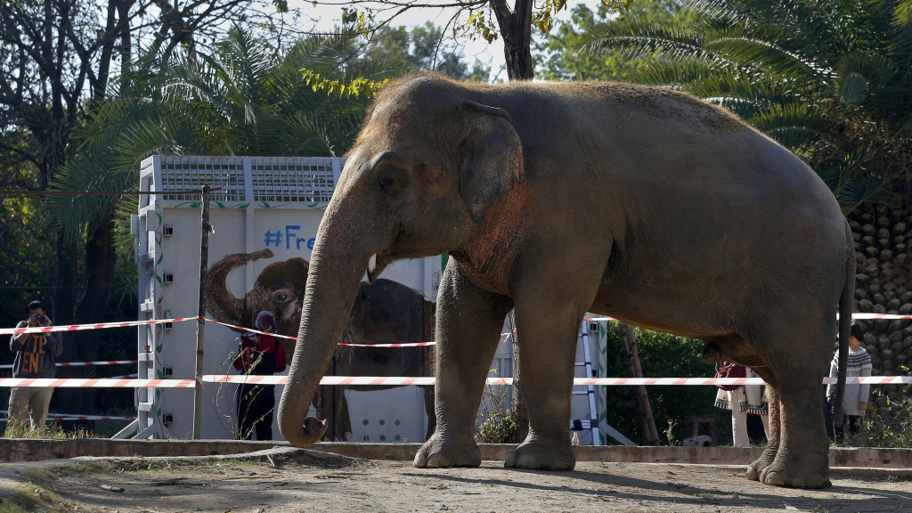 Kaavan, pictured Friday in Islamabad, will be transported to a sanctuary in Cambodia on Sunday.