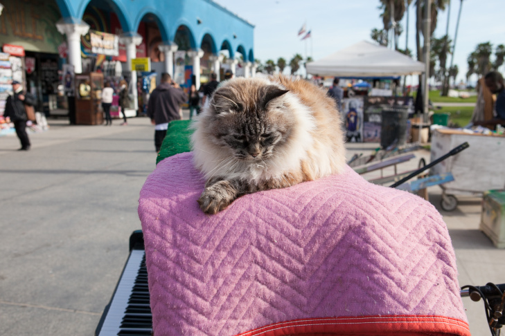 Venice Boardwalk Piano Player - 9