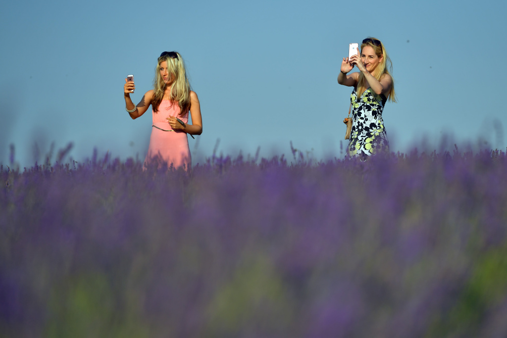 Women take selfie photographs in a field of lavender at the Mayfield Organic Lavender field on August 17, 2016 in Banstead, England.