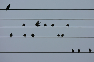 City birds are adjusting their tunes to be heard.