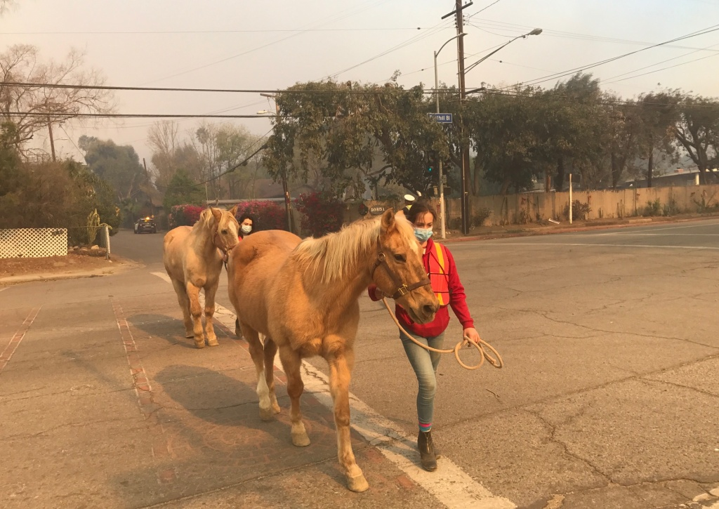 In Lake View Terrace, locals walked horses to safer stables away from the Creek Fire.