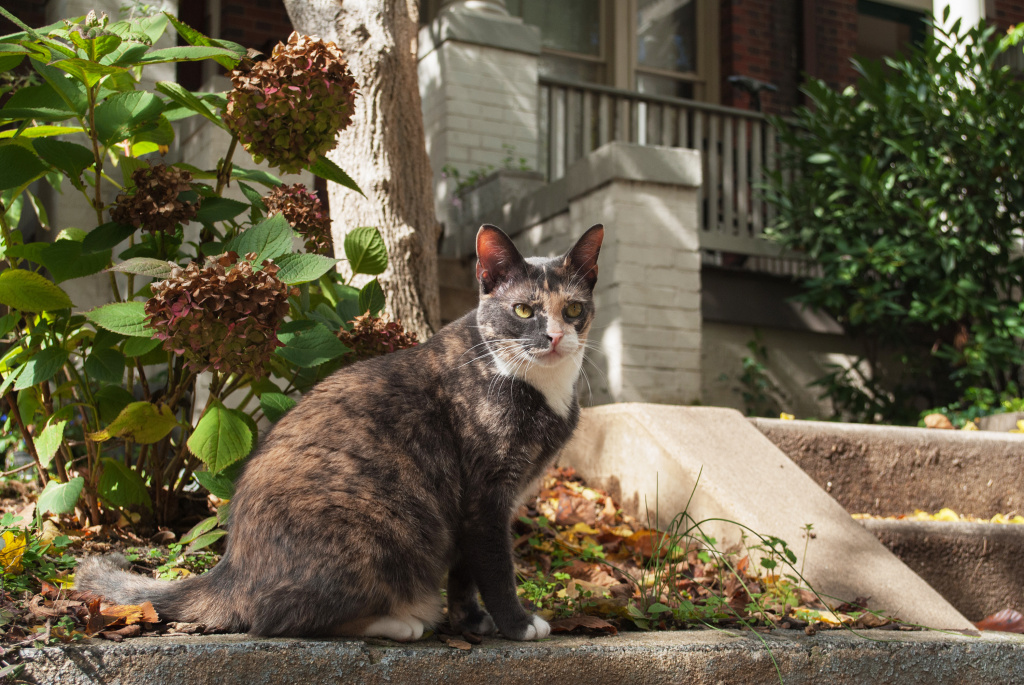 A coalition of groups in Washington, D.C., are attempting to count the cats in the District.