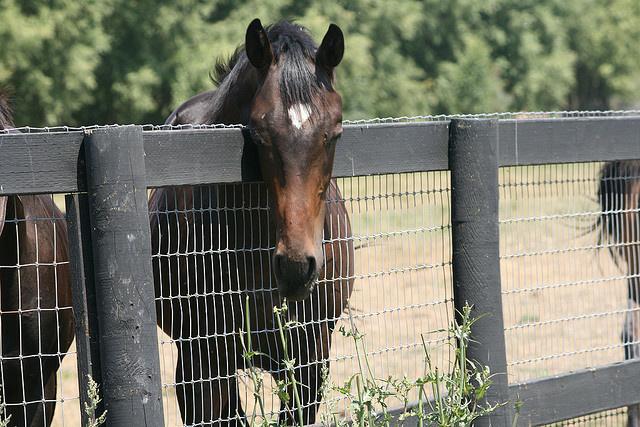 File photo: Horse.