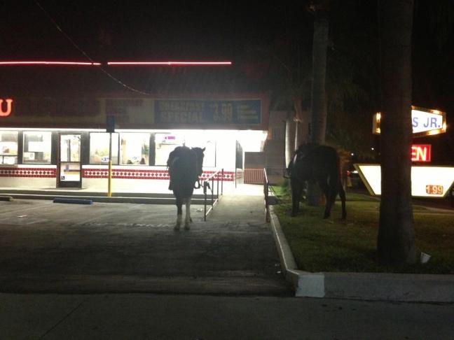 Compton horses