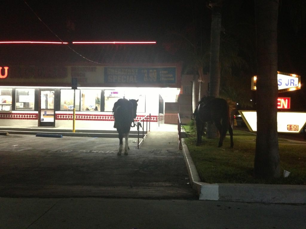 The highlight of my Compton patrol car ride along: horses at the burger shack.