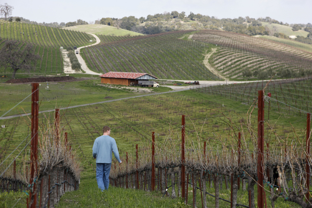 FILE - In this Feb. 2, 2010 file photo, winemaker Jason Haas walks past rows of Grenache Blanc vines at Tablas Creek Vineyard in Paso Robles, Calif.