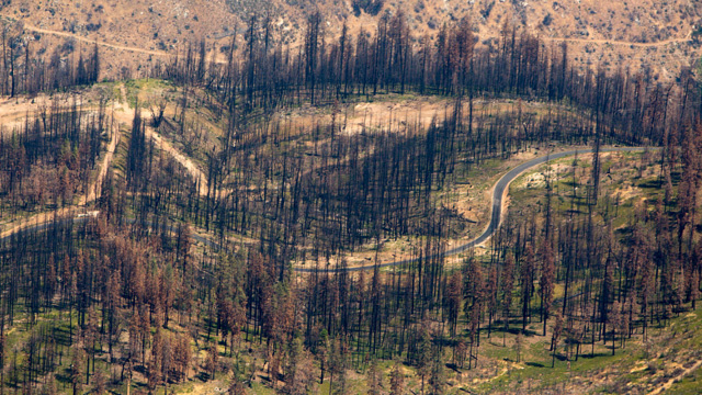 A small portion of the Rim Fire burn zone in the Stanislaus National Forest.