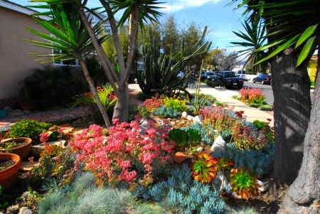 Mar Vista's annual green garden showcase promotes the kind of landscaping that the LADWP's lawn-removal program promotes.