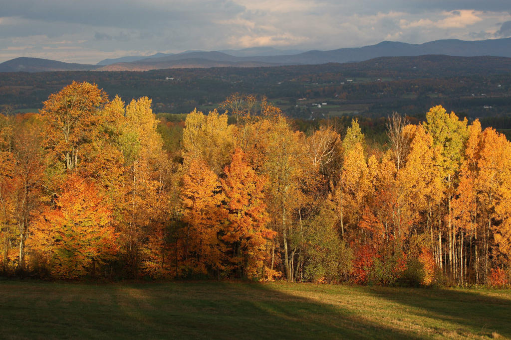 With the Green Mountains in the background, the rising sun illuminates a stand of trees on October 20, 2007, in this view from Comstock House in Plainfield, Vermont.