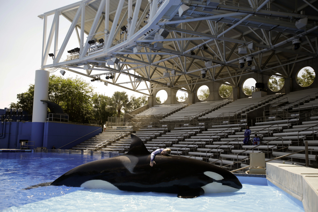 In this April 10, 2014 file photo, Sea World trainer Michelle Shoemaker hugs killer whale Kayla as she works on a routine before a show, in Orlando, Fla. SeaWorld Entertainment, Inc. has faced criticism over its treatment of its captive killer whales since the release of the highly-critical documentary,