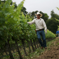 A vineyard worker for a Napa Valley wine