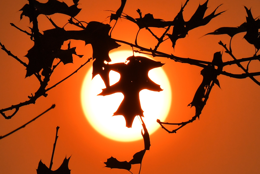 A picture taken on October 16, 2017 in Le Gavre, western France, shows oak leaves silhouetted in the autumn sun.