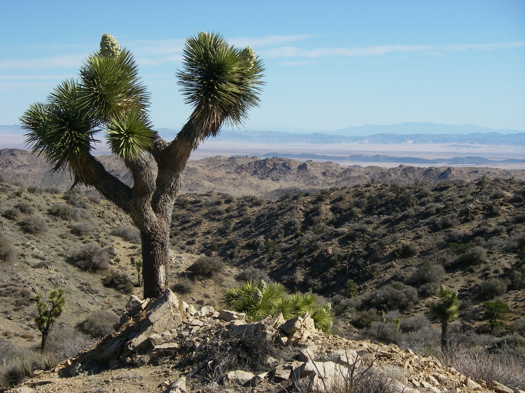 A view from Eureka Peak in Joshua Tree National Park on April 3, 2013, looking north into the Twenty-Nine Palms Marine Base, from KPCC member Mike Dusich.
