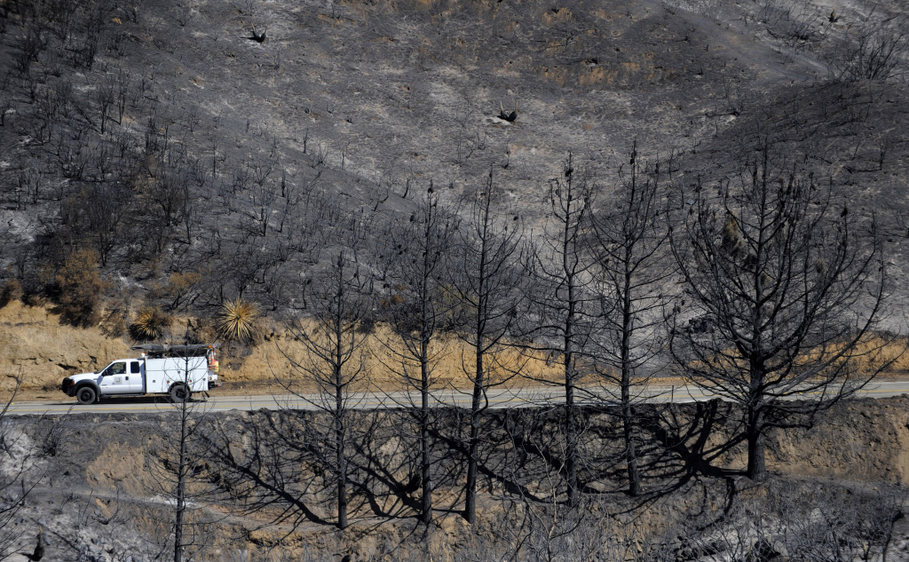 A truck drives past burned trees in the Angeles National Forest after the 2009 Station Fire.