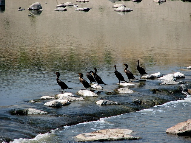 Wildlife in the Los Angeles River
