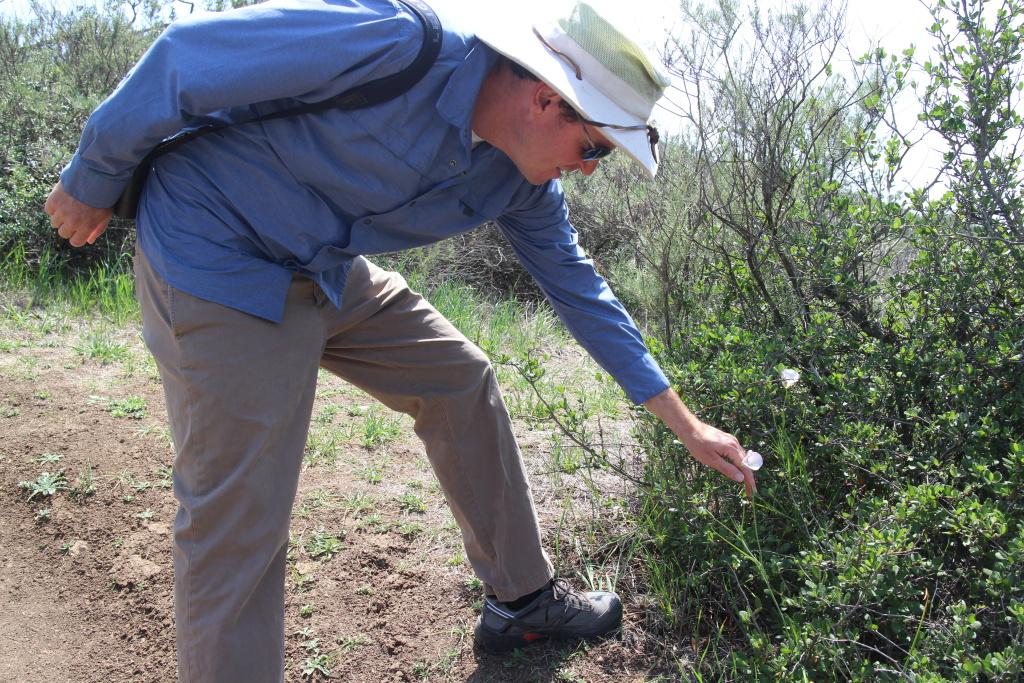 Biologist Dan Cooper checks a wildflower that has bloomed two months later than normal because of late season rains.