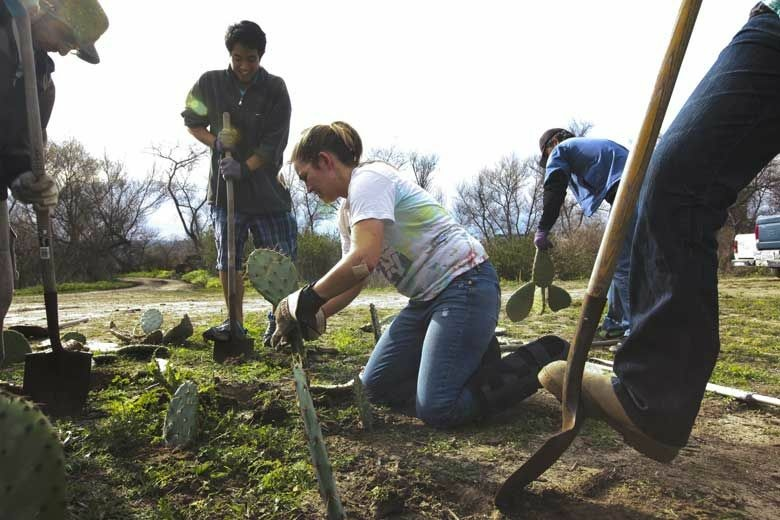 Students in biological sciences and independent study plant cacti in UCI Ecological Preserve above State Route 73.
