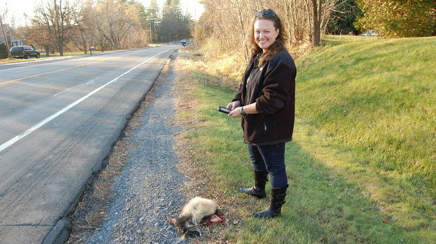 When wildlife ecologist Danielle Garneau finds road kill, she uploads data about it onto her smartphone.
