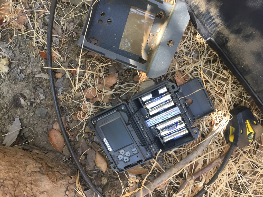 Photo of one of Miguel's wildlife cameras.