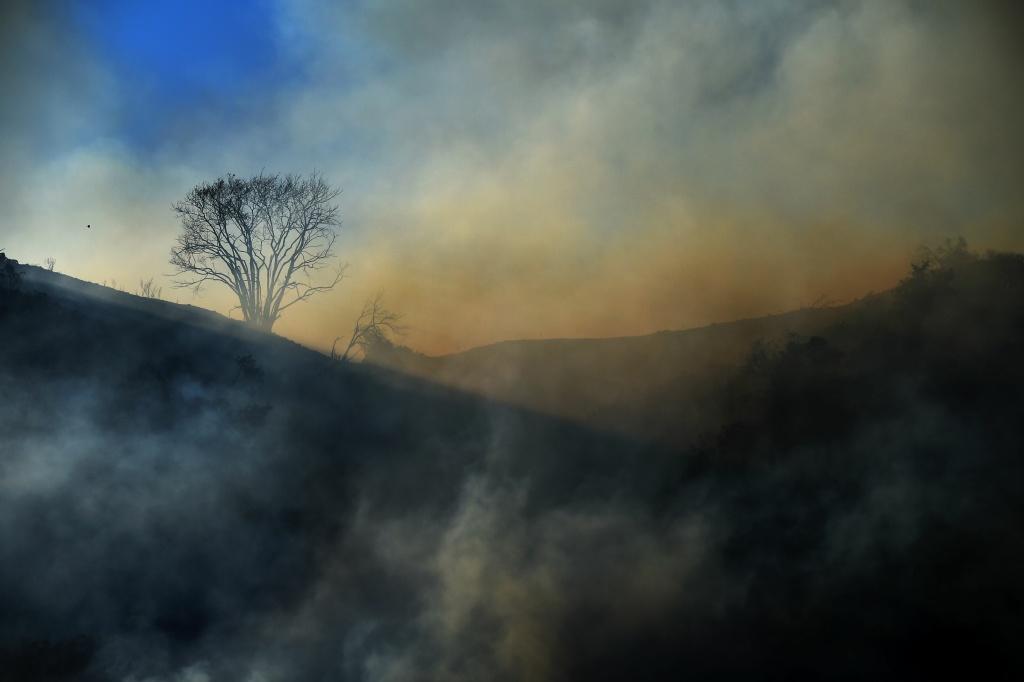 A dead tree is enshrouded in smoke June 20, 2016 in Duarte.