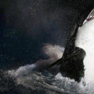 FRANCE-ANIMAL-ORCAS