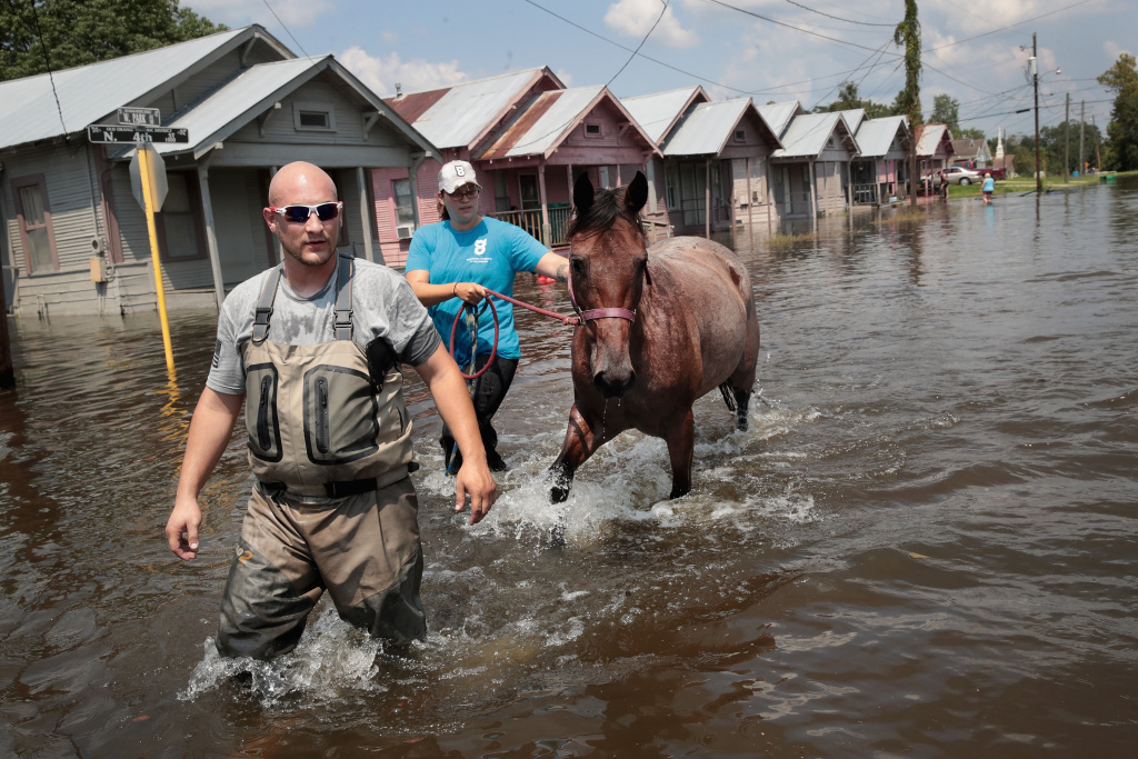 Marine veterans Chris Miller (left) and Megan Lowry with the Wounded Veterans of Oklahoma rescue a horse from floodwater after torrential rains pounded Southeast Texas following Hurricane Harvey.