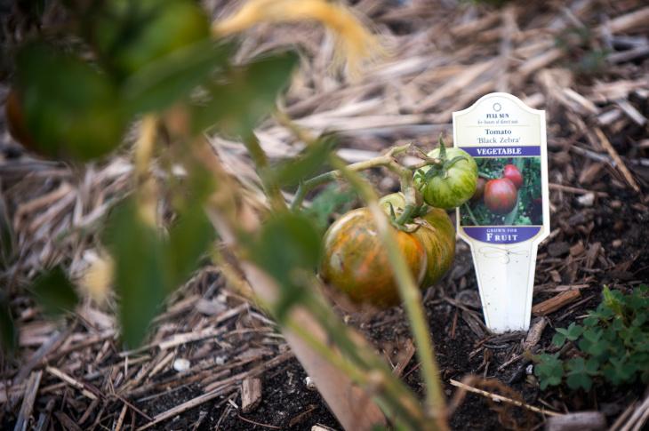 Sidewalk Farming - 5