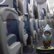 A screenshot from Delta's new in-flight safety video featuring famous Internet celebrities, memes and viral video stars like Roomba Shark Cat.