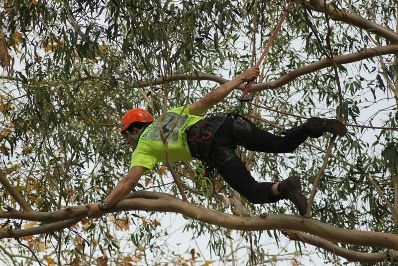 A climber participating in the 2011 Tree Climbing Championship.
