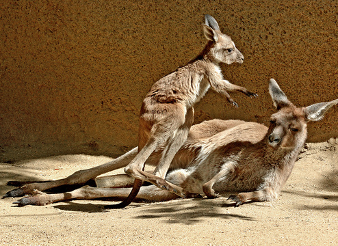 The public can compete to name a baby kangaroo at the LA Zoo.