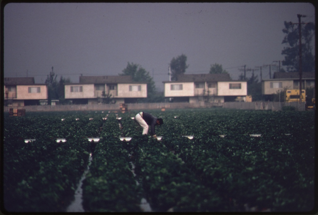 Irrigated agricultural land on the Oxnard Plain, north of Los Angeles from the National Archives  / Charles O'Rear 1941
