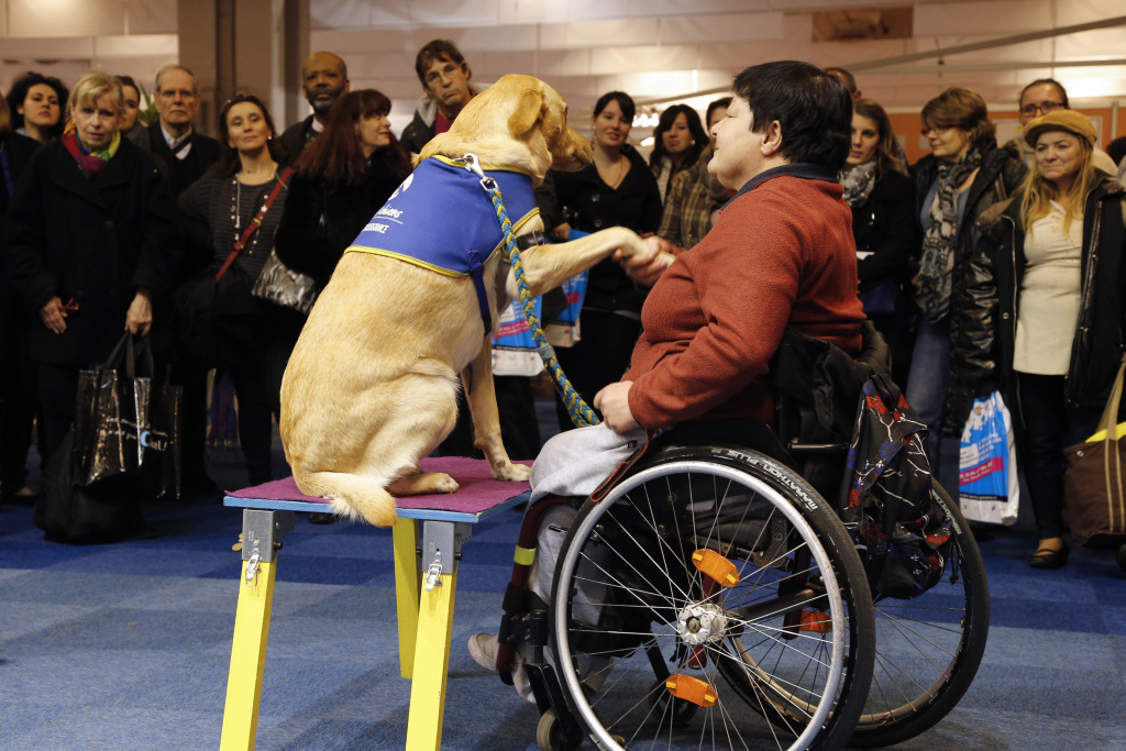 A disabled woman in a wheelchair takes part in a training session with a guide dog, on December 1, 2012, during a fair dedicated to services to the elderly and the disabled, at the Porte de Versailles congress hall in Paris.