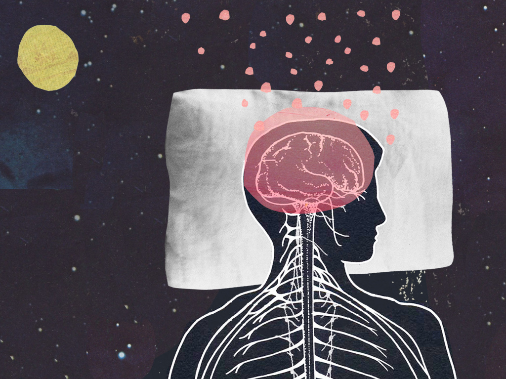 What do our brains do while we sleep?