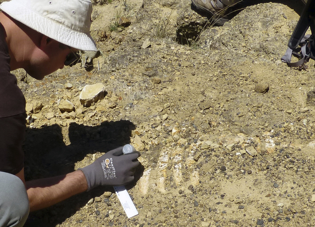 In this July 21, 2017 photo provided by the National Park Service shows Dr. Jonathan Hoffman, paleontologist with the Santa Barbara Museum of Natural History works on an ancient Sea Cow fossil on Santa Rosa Island. Scientists say they've unearthed fossil remains of a sea cow off Southern California's Channel Islands that lived off some 25 million years ago. The National Park Service says the fossil skull and rib cage were discovered this summer, about 50 miles northwest of Los Angeles.
