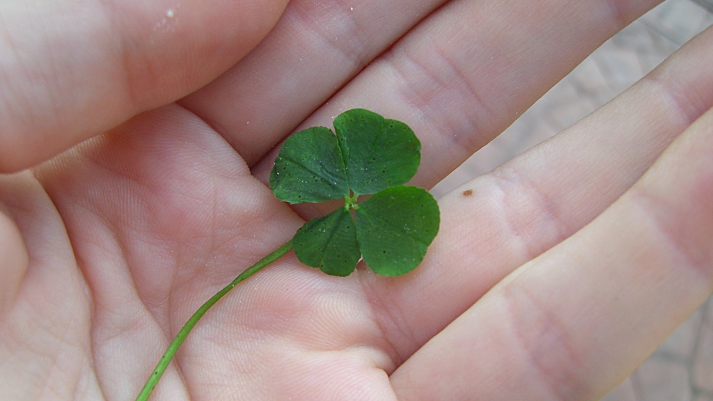 The likelihood of finding a four-leaf clover, or shamrock, is estimated one in 10,000.