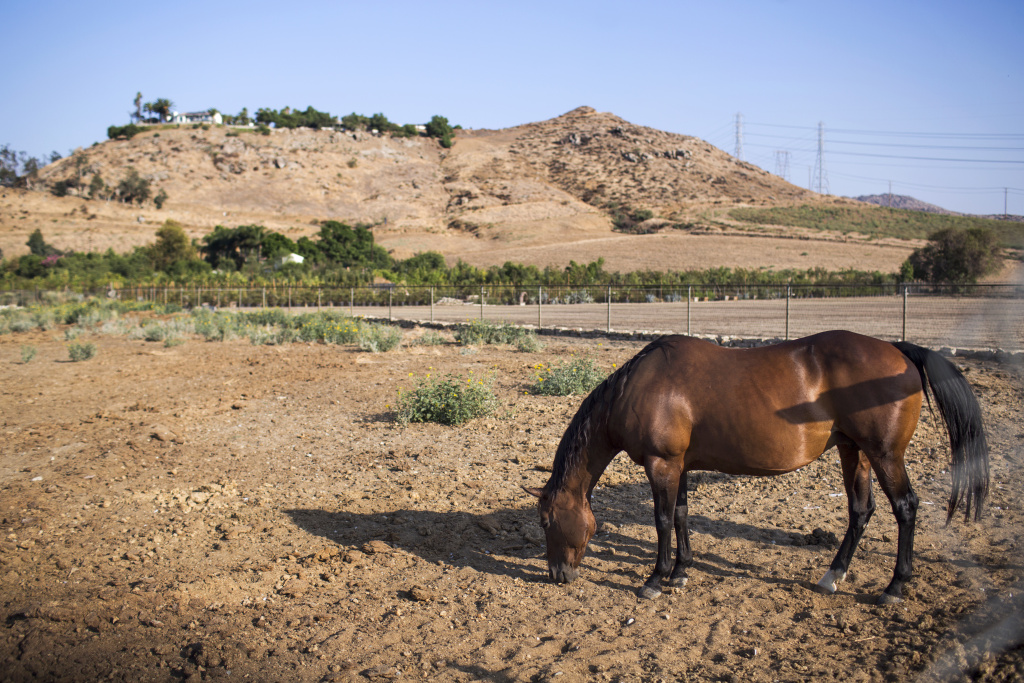 Horse on a farm in California.