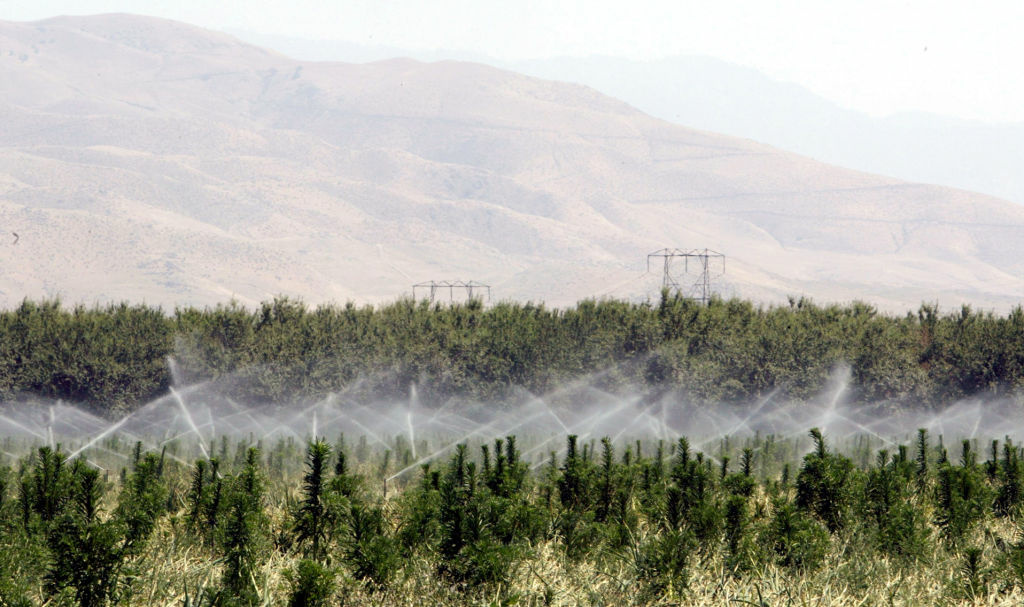 File: An onion farm is irrigated with water supplied by Arvin-Edison Water Storage District, May 25, 2005, in Arvin, California.