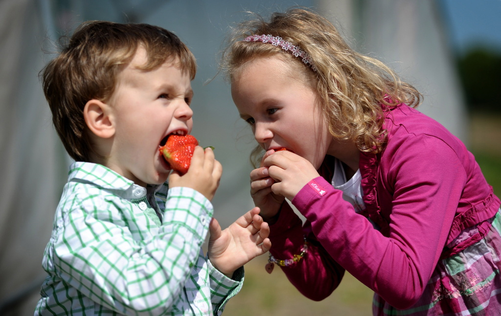 Three-year old Leonard and his five-year old sister Amelie enjoy eating a strawberries during the opening of the crop season on May 19, 2010 in Luedinghausen, western Germany.