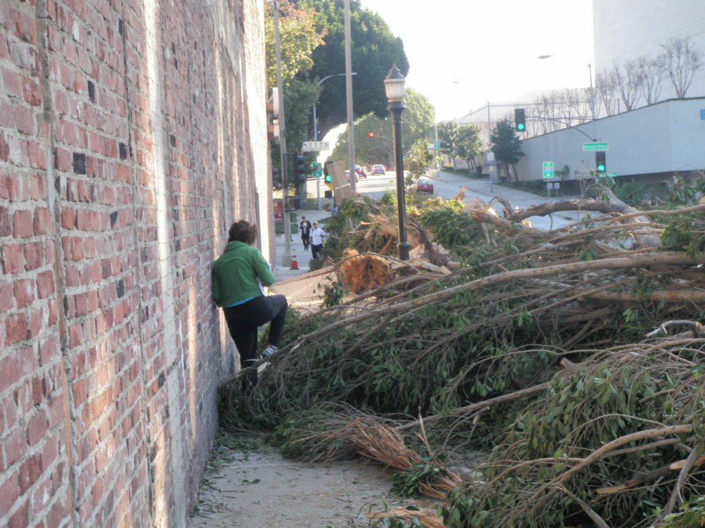 A fallen tree has been chopped up and moved to the sidewalk to clear roads on Green St., Pasadena, Calif. Los Angeles County residents can take their debris and get it hauled away for free at select locations this weekend, Dec. 3-4, and next Saturday, Dec. 10.